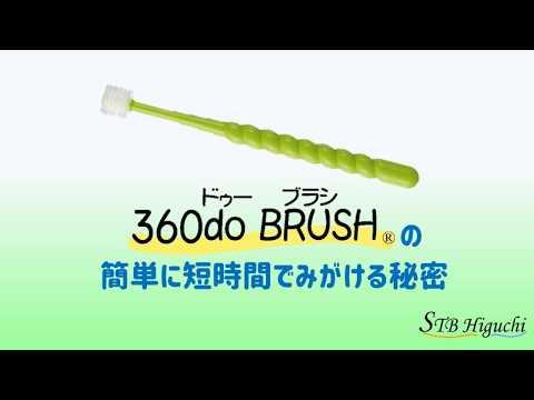 スティア― 360度毛歯ブラシ 簡単に磨ける秘密