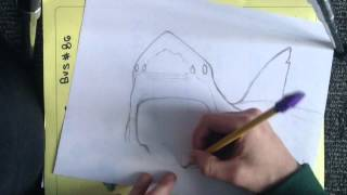 How to draw a great white shark part 1