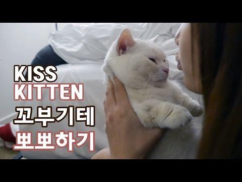 꼬부기 한테 뽀뽀 하기 - 1살 오드아이 먼치킨 고양이 Munchkin Cat Gato マンチカンねこ 短足猫