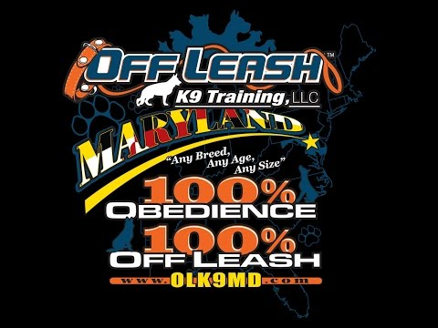 Off Leash K9 Training Maryland can help you and your dog achieve amazing obedience