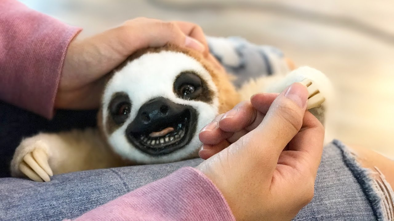 Box Opening Super Realistic Sloth Baby Youtube