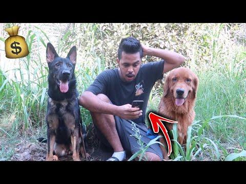 حصلت كلبي روكي معروض للبيع في موقع بـ10,000 الاف ريال !!💔