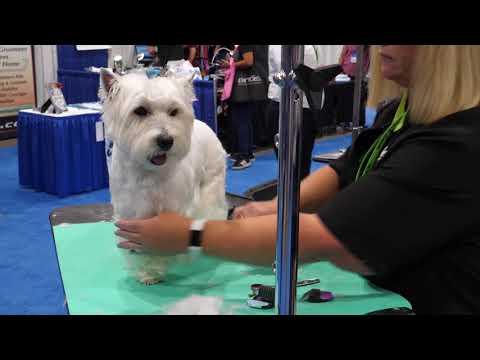 Grooming Westie Feet: A Dog Grooming Demo
