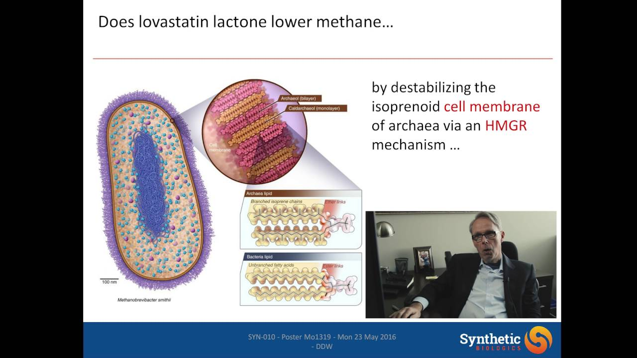 Syn-010, a Proprietary Modified-Release Formulation of Lovastatin Lactone,  May Improve