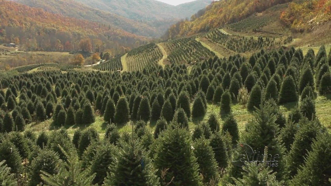David Pittmans Christmas Tree Farm