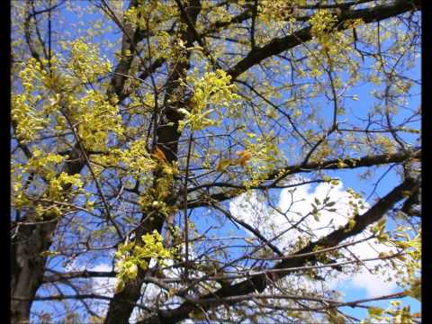Early Spring (Buđenje ranog proleća)