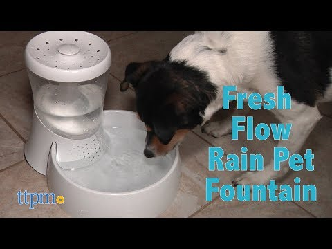 Fresh Flow Rain Pet Fountain from Petmate