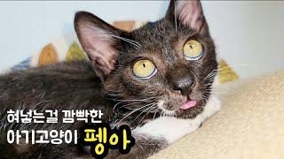 혀 넣는걸 깜빡한 2달된 아기고양이 펭아, cute k…