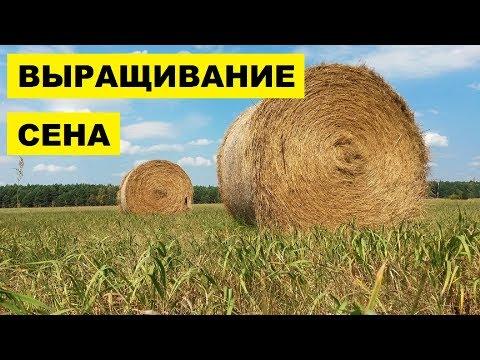 Вопрос: Как выращивать сено?