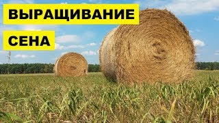 Выращивание и продажа сена как бизнес идея
