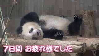 2019/8/16 (2) 「真夏の夜の動物園」最終日最終観覧のシャンシャン Giant Panda Xiang Xiang
