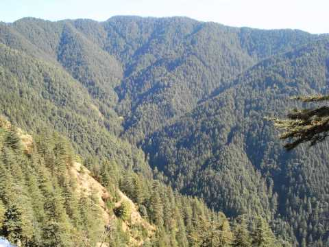 Green Valley | Simla, Himachal Pradesh
