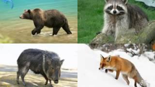 МАЛЫШ УЧИТ ЖИВОТНЫХ дикие животные ВЗАИМНАЯ ПОДПИСКА 21.04.2017