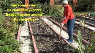 Восстановление плодородия и здоровья почвы после уборки урожая