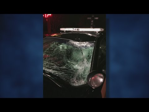 Deer Hit By Car Is Hurled At Anoka Co. Deputy's Squad