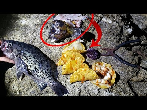 Fishing for Survival ** Day 1 **  Desperation Fish Tacos