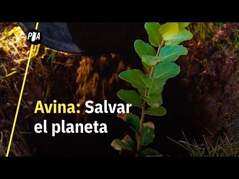 Avina: la ONG que puede salvar al planeta con cadenas de acción