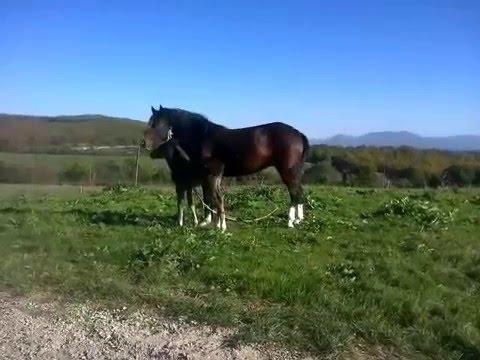 Yeni Doğmuş At Yavrusu Bulgaristan Karamusalar воденци Youtube