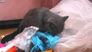 Кошка ест полиэтилен