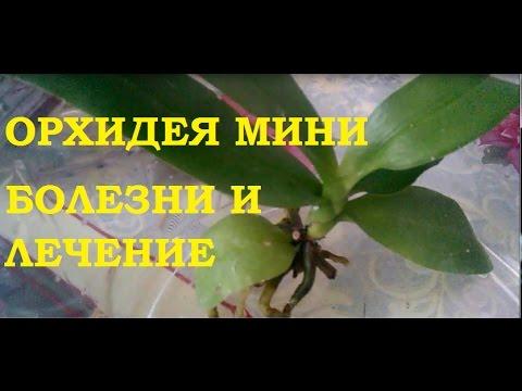 Орхидеи - Орхидеи - праздник для глаз!