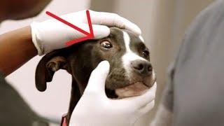 «Придется усыпить» — сказал врач женщине, отказываясь лечить собаку!!!