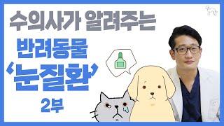 강아지,고양이 눈병 생기는 이유(눈 찡그림/샴푸/안구건…