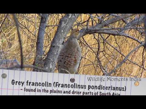 The Sound of Birds : Amazing Vocalization of Birds - Part 1