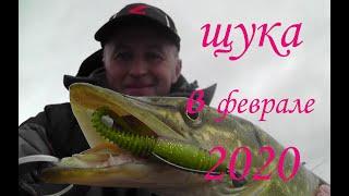 Какой цвет приманки нужен щуке в феврале 2020 Рыбалка на щуку 2020 Окунь на спиннинг 2020