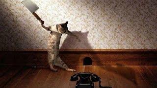 Смешные кошки :)  Часть 230 - Кто кого боится?:))