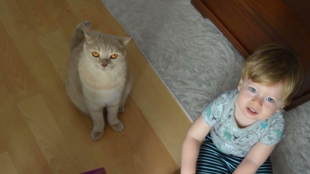 Aras'ın Kedisi Pishi'nin Anısına...