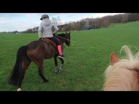 Im Wald springen?!   Paola, Smarty & Inka ❤️   Marina und die Ponys