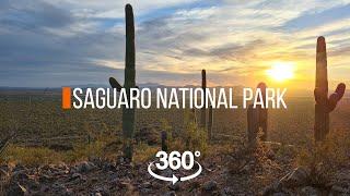 Прогулка по парку Сагуаро   360 видео