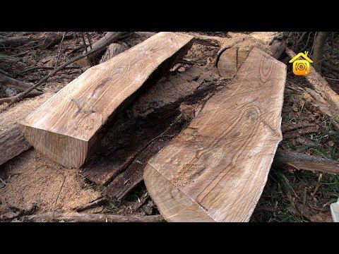 видео: Строительный материал под ногами. Обработка сухостоя // forumhouse