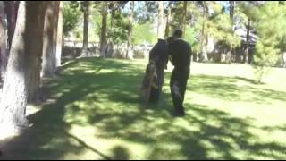 Citizen K9 Protection Dog Training With Clayton (austrailian Cattle Dog)