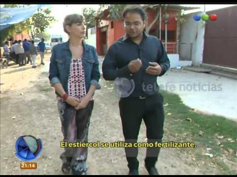 India, la tierra de las vacas sagradas  - Telefe Noticias