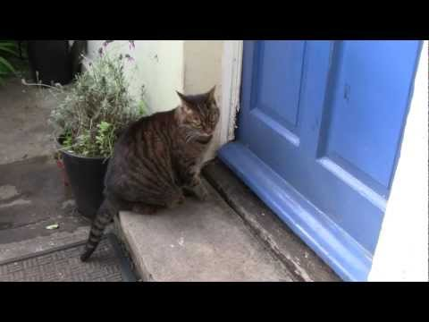 Tabby Cat knocking on door