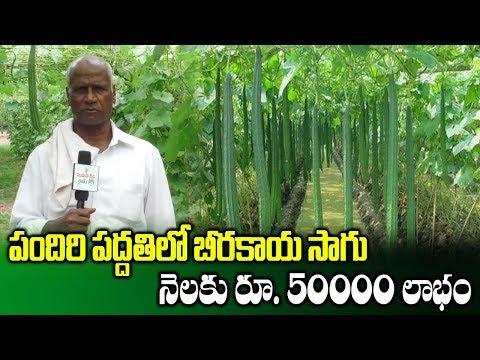Ridge Gourd Farming || Cultivation Of Ridge Gourd Through Pendal System || SumanTV Rythu