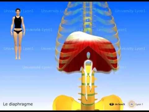 Comprendre la respiration, faire des exercices simples chaque jour pour une meilleure santé.