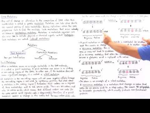 Point Mutations (Base-Pair Substitutions)