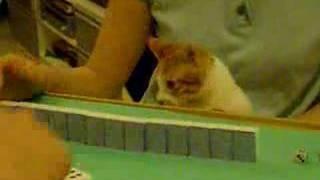 Funny playing mahjong