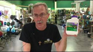 How To Control Chickweed In Knoxville TN