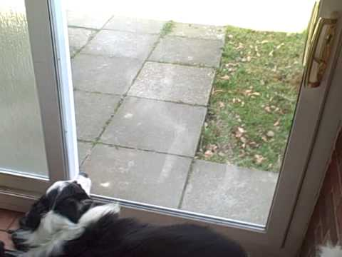 Dog Runs Into Plate Glass Door And Chases Squirrels Youtube