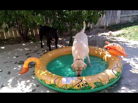 Jumbo swimming