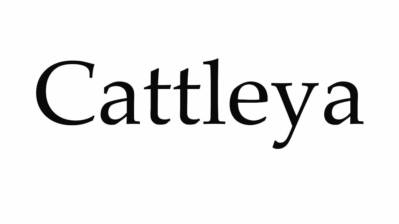 Image result for Cattleya Technosys