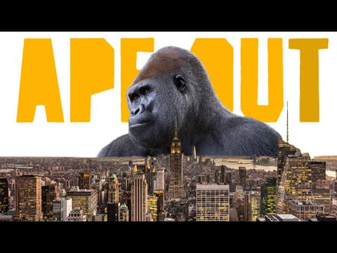 This is Gorilla City Now | APE OUT |
