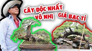 Vườn cây độc lạ của anh chàng Bến Tre mang lên Sài Gòn bán Tết giá bạc tỉ