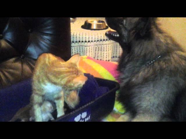 Cat defends her kittens