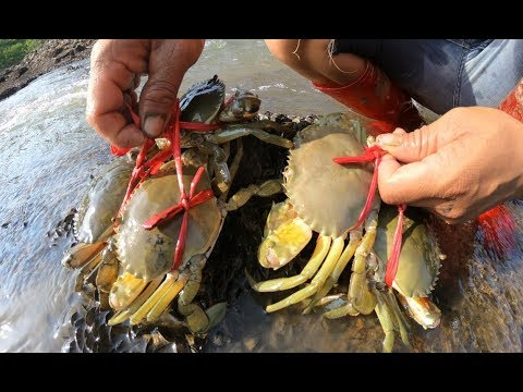 潮水退下后,这里藏着大青蟹,刀仔连抓好几只,有点过瘾哦
