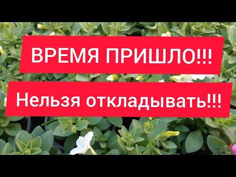 Семена и Рассада, где и как заказать!?//ОТВЕТ 🍅🌶🌱