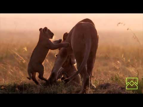 2015 Jackson Hole Wildlife Film Festival Trailer: NC Museum of Natural Sciences